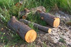 Three sawn logs on the grass stock photo