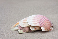 Three scallops on the sand Royalty Free Stock Image