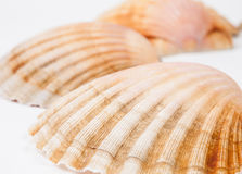 Three scallops on white Stock Images