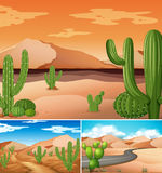 Three scenes with cactus plants along the road. Illustration Stock Photos