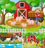 Three scenes of farmer working in the farm Royalty Free Stock Images