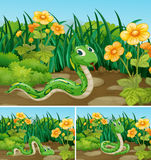 Three scenes with green snake in garden stock illustration