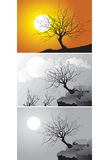 Three Scenes of tree. In different environment - vector illustration Royalty Free Stock Images