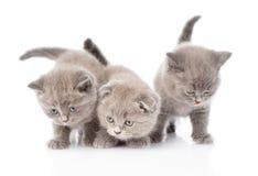 Three scottish kittens. isolated on white background Stock Photo