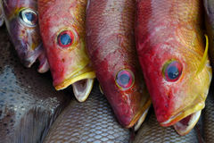 Three sea fish red scales, fins are yellow and blue, round eyes, open mouths, fresh sea fish market. Three sea fish red scales, fins are yellow and blue, round Stock Photo
