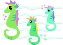 Three Sea Horses in the Sea Royalty Free Stock Images