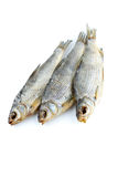 Three sea roach fishes Stock Images