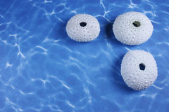 Three sea shells Stock Image