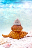 Three sea shells Royalty Free Stock Photography
