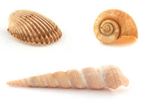 Three Sea Shells Stock Images