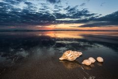 Sea Shells Sundown. Three sea shells on a New Zealand beach at sunset royalty free stock photo
