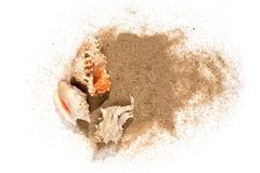 Three sea shells in sand pile isolated. On white background, top view stock photos