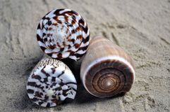 Three sea shells on top of each other Stock Photo