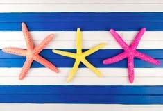 Three sea stars. Royalty Free Stock Images