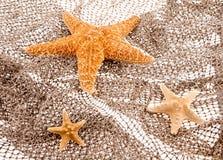 Three sea stars lie on the fishing net Royalty Free Stock Photos
