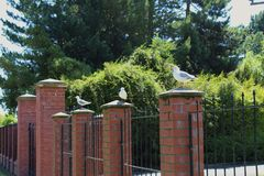 Three Seagulls on a fence. Three seagull perch on a fence post each at the park Royalty Free Stock Photos