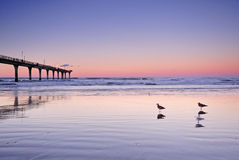 Three Seagulls in the beach at Sunset. Seagulls, sunset and New Brighton Pier Stock Photos