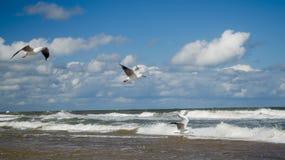 Three seagulls flying on the seashore royalty free stock photo