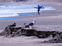 Three Seagulls Sitting And Standing On Sand Royalty Free Stock Image