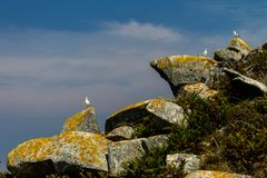 Three Seagulls Stand on Rocks. Three seagulls stand on a few rocks Royalty Free Stock Image