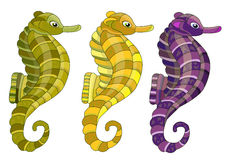 Three seahorses Royalty Free Stock Photography
