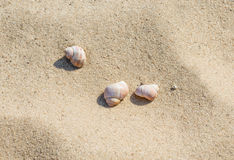 Three seashells on the sand Royalty Free Stock Images