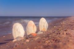 Three seashells in the sand. The sea coast with seashells, half in the sand royalty free stock photos