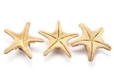 Three seastars Stock Image