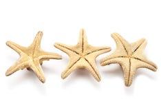 Three seastars Stock Image