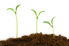 Three seedlings Stock Photo