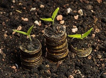 Three seeds with coin in soil golden coin Royalty Free Stock Photography