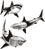 Three sharks Royalty Free Stock Photography