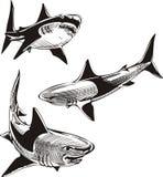Three sharks Royalty Free Stock Photography