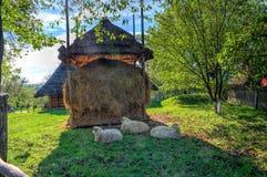 Three sheep near the hayloft Stock Photo