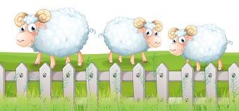 Three sheeps. Illustration of the three sheeps Royalty Free Stock Photo