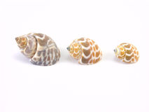 Three shells. On a white background Stock Image