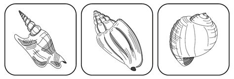 Three shells. Clipart with three shells on white background vector illustration