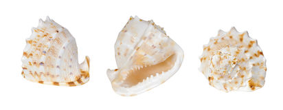 Three Shells Stock Photography