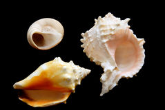 Three Shells Stock Images
