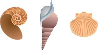 Three shells. Three vector icons of shells on the white Royalty Free Stock Photos