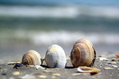 Three shells on a beach. Stock Photo