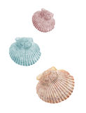 Three shells isolated Royalty Free Stock Photography