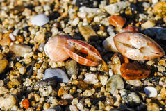 Three shells lying on the sand Stock Photo