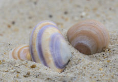 Three shells on the sand Royalty Free Stock Photos