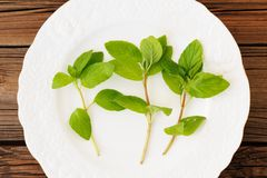 Three shoots of fresh wild mint on white plate on wooden backgro Royalty Free Stock Image