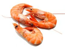 Three shrimps. Over white background Stock Image