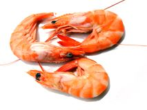 Three shrimps. Over white background Stock Images
