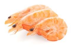 Three shrimps Stock Photos