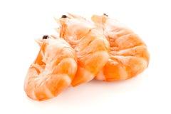Three shrimps Stock Images
