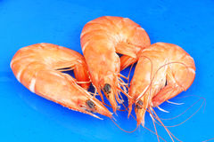 Three shrimps over blue Royalty Free Stock Photography